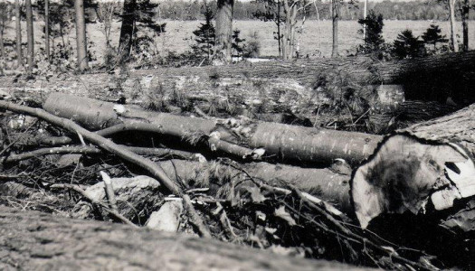 The Hurricane of 1938: An Oral History Told by Nancy Allen Holst,  Forest Fire Warden and Pilot Part II: The Great Timber Blowdown